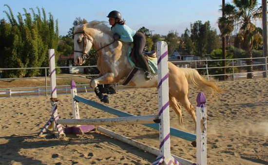 Emily Ruocco Equestrian Training Hunter Jumper