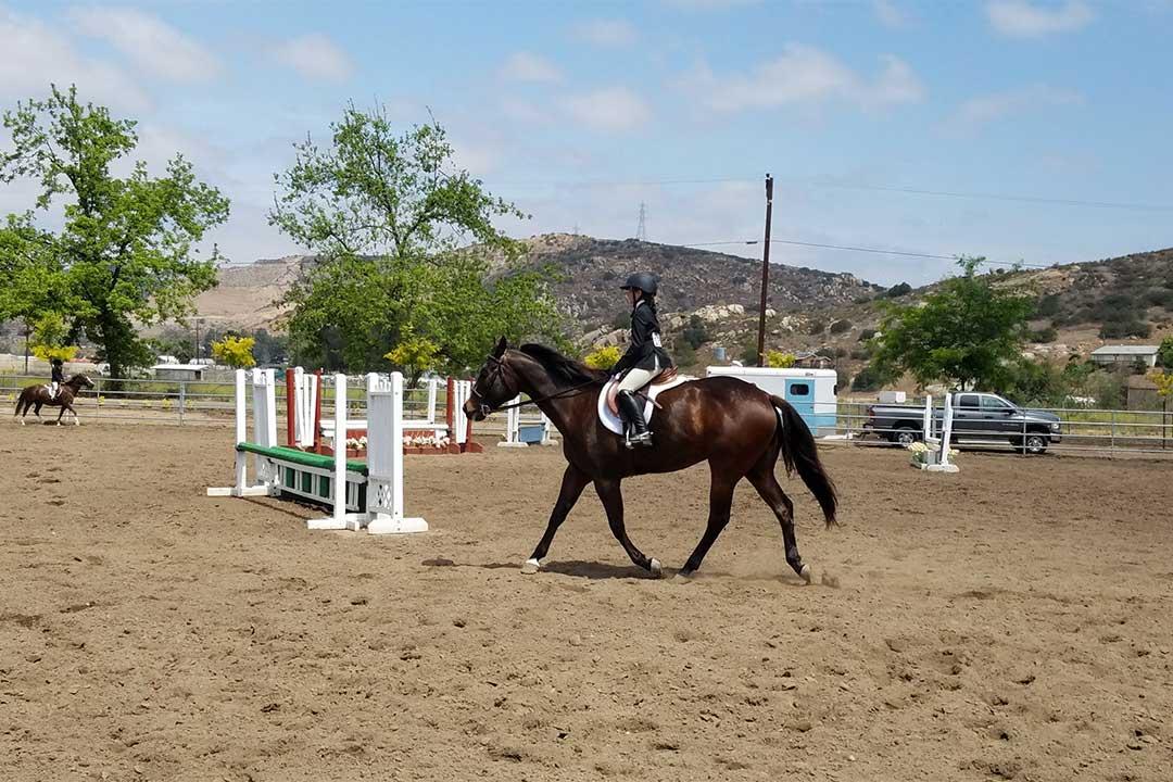 Ruocco Equestrian Show Team